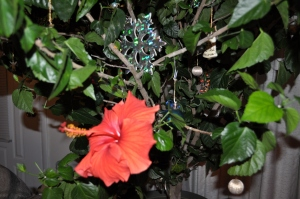 Hibiscus at Christmas