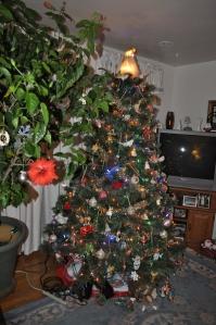 Hibiscus & Christmas