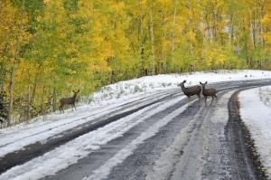 4 deer