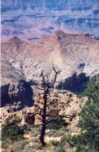 Grand Canyon x3